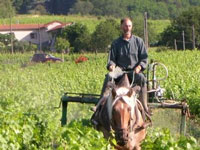biodynamic farming horse