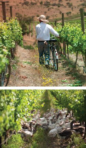 sustainable wine growing